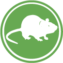 Rodents - Hantavirus